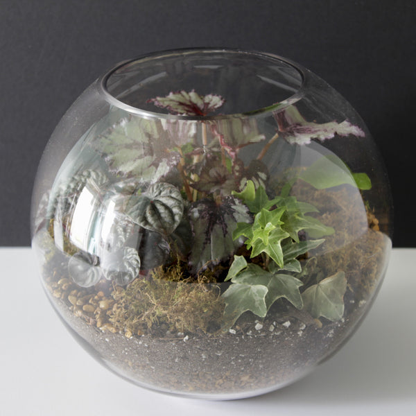 Glass Bowl Planted