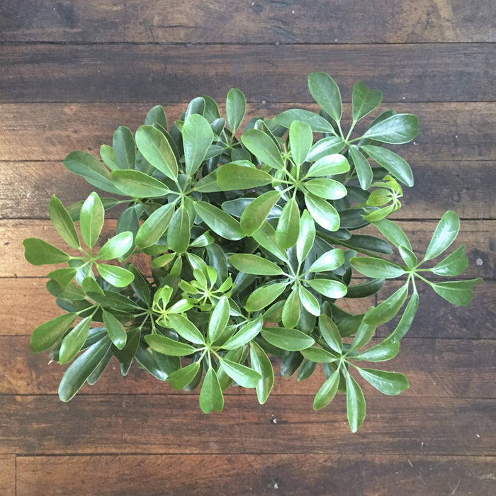 Order Indoor House Plants In Minneapolis Mn Spruce