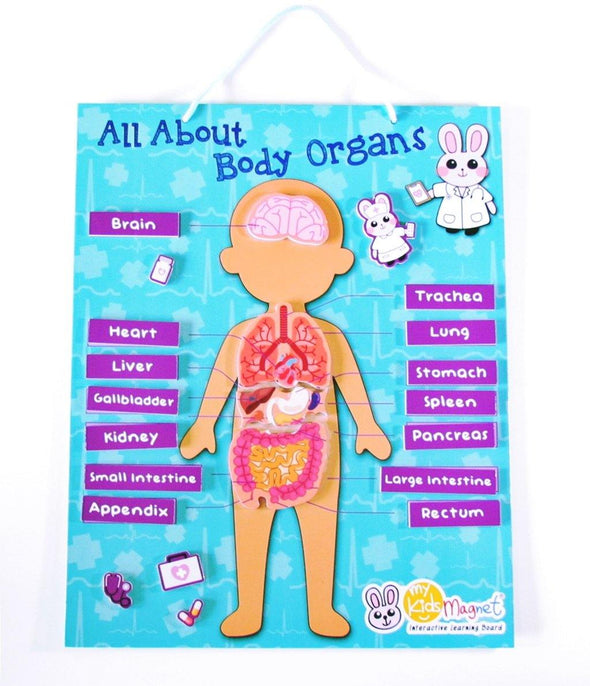 All About Body Organs