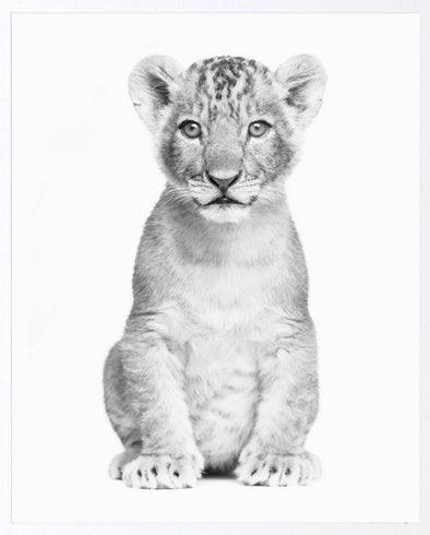 Photographic Lion Cub Print