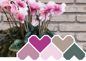 Colour Inspiration June ~ 'Pink Thrills'