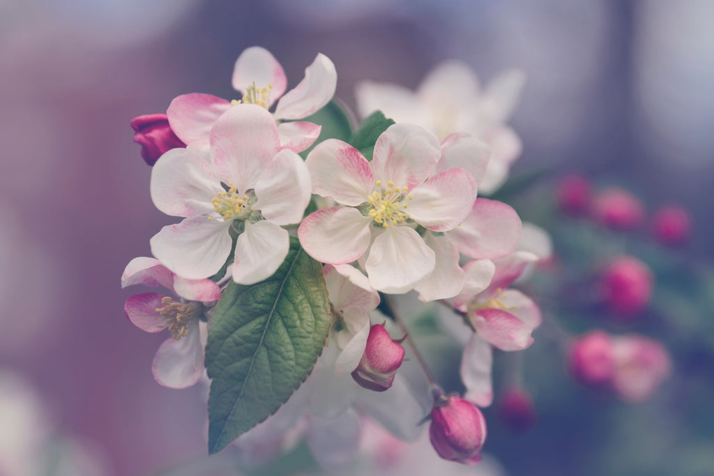 Monthly Musing ~ Blossoming