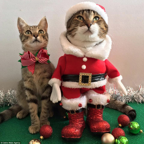 Santa Claws is Here!