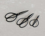 BLACK HERB SCISSORS