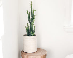 CROCK | ANTIQUE IVORY