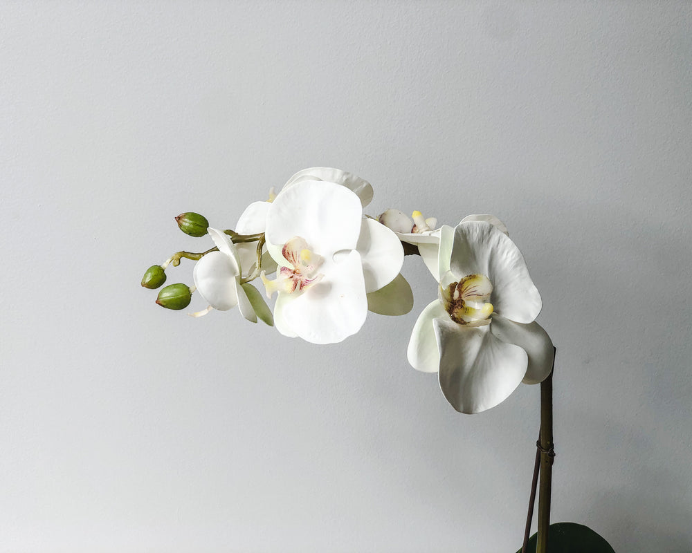 FAUX ORCHID | SINGLE SPRAY