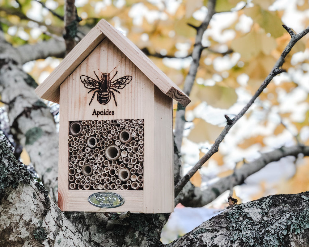 APIOIDEA BEE HOUSE