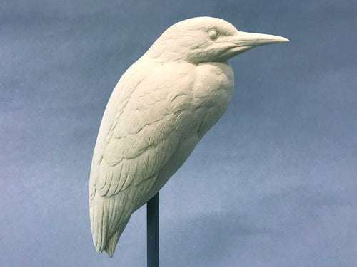 Black-crowned Night Heron 1/3 scale Cast
