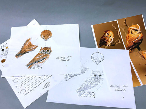 American Kestrel 1/2 scale Packet