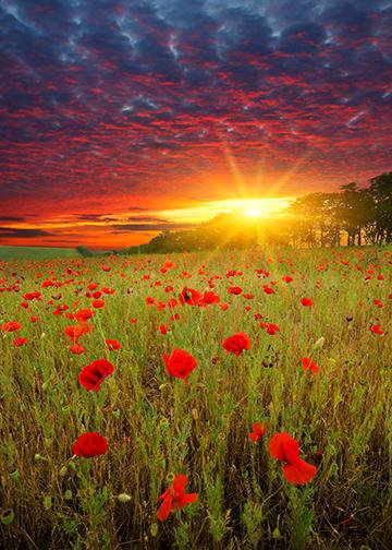 Sunset in Red Poppies, DoorWrap - Door Decoration