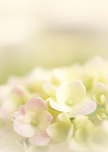 Soft Pink Hydrangea, DoorWrap - Door Decoration