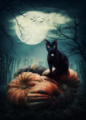 Black Cat on Pumpkins