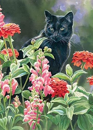 Black Cat Decor Max in the Zinnias by Susan Bourdet.