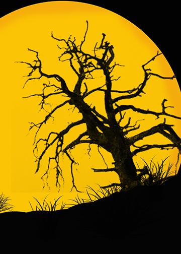 Yellow Full Moon, DoorWrap - Door Decoration