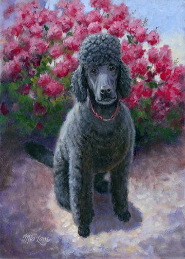 Black Poodle Decor