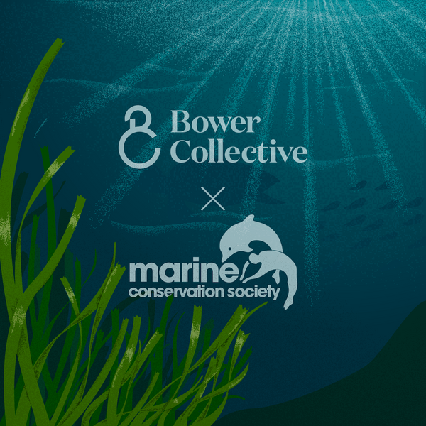 Bower Collective partners with the Marine Conservation Society to protect endangered seagrass