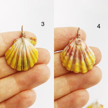 Sunrise Shell Wire Wrapped Pendants from Hawaii - Natural Color - Sunrise Shells - Sunnies (390 No. 1-10)