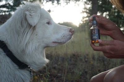 Your Guide to Hemp Extract for Pets