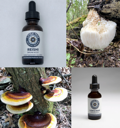 The Benefits of Mushroom Tinctures: Get to know Lion's Mane and Reishi