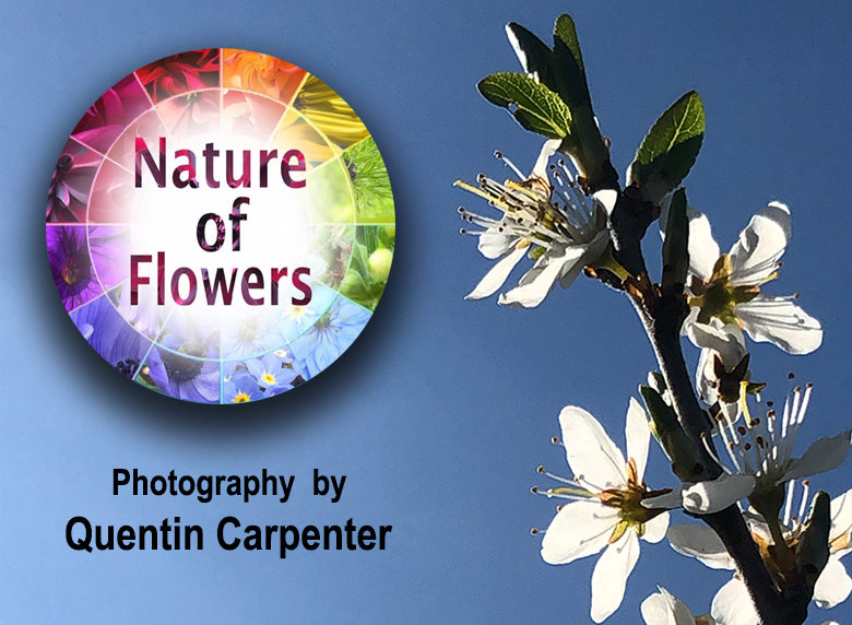 Nature of flowers photography by Quentin Carpenter