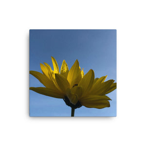 "Open image in slideshow, ""Catching the first rays of the day"" Yellow Flower Canvas - Nature of Flowers"