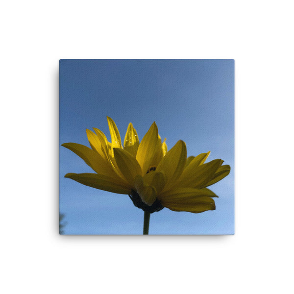"""Catching the first rays of the day"" Yellow Flower Canvas - Nature of Flowers"