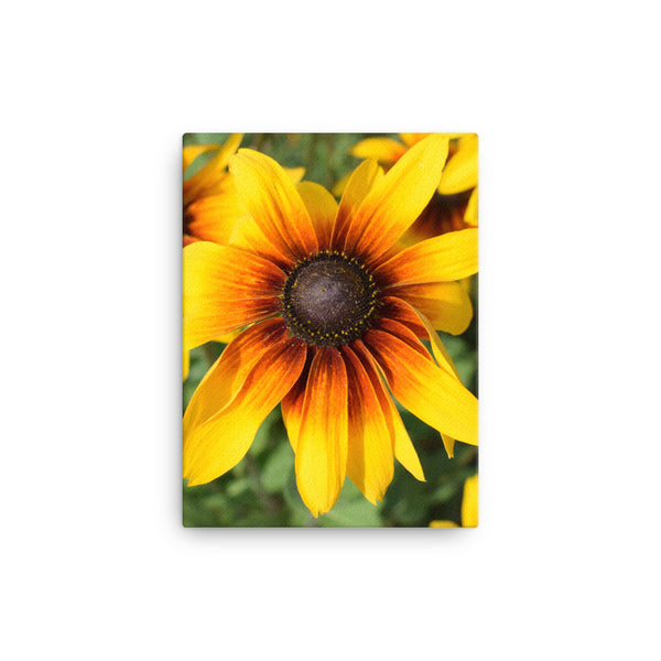 """Bursting with colour"" Yellow Flower Canvas - Nature of Flowers"