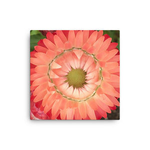 "Open image in slideshow, ""Completing the circle inside the circle"" Pink Flower Canvas - Nature of Flowers"