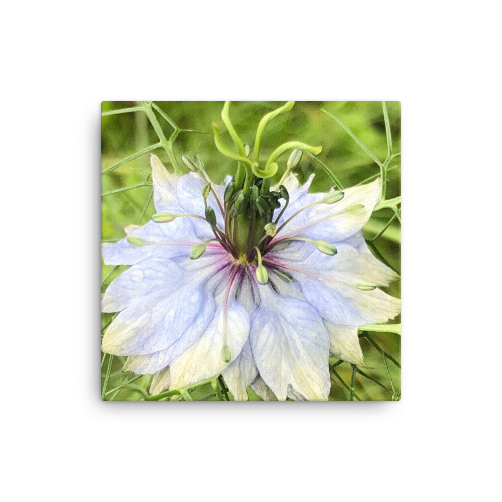 """The joy of having time"" Blue Flower Canvas - Nature of Flowers"