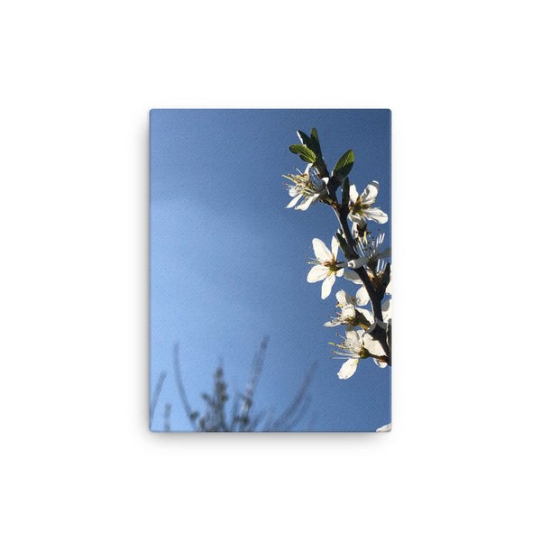 """Less is sometimes more"" White Flower Canvas - Nature of Flowers"
