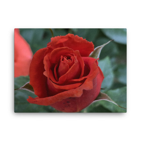 """The Perfect Bloom"" Red Rose Flower Canvas - Nature of Flowers"