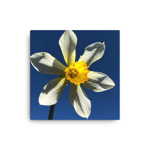 """Find your Peace"" Yellow Flower Canvas - Nature of Flowers"