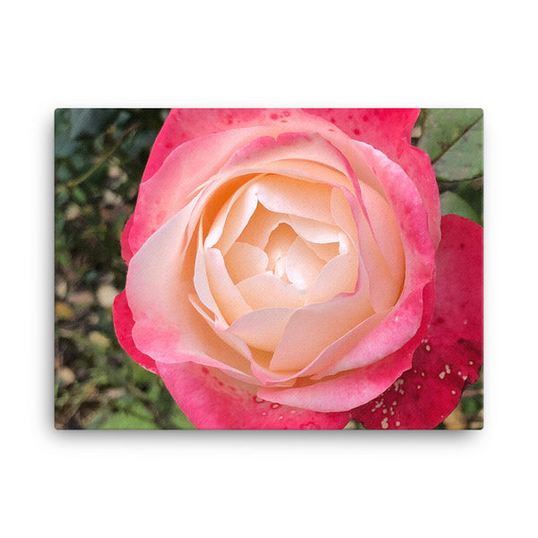 """Deep inside the mellowness""  Pink and Red Flower Canvas - Nature of Flowers"