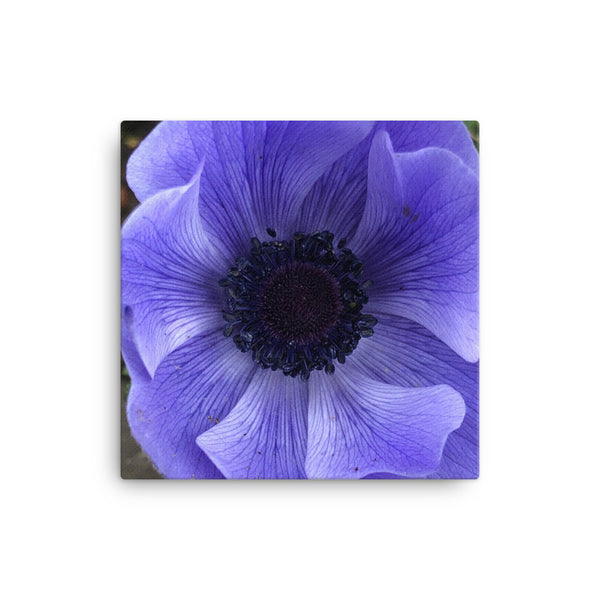 """Catching the blue wave"" Blue Flower Canvas - Nature of Flowers"