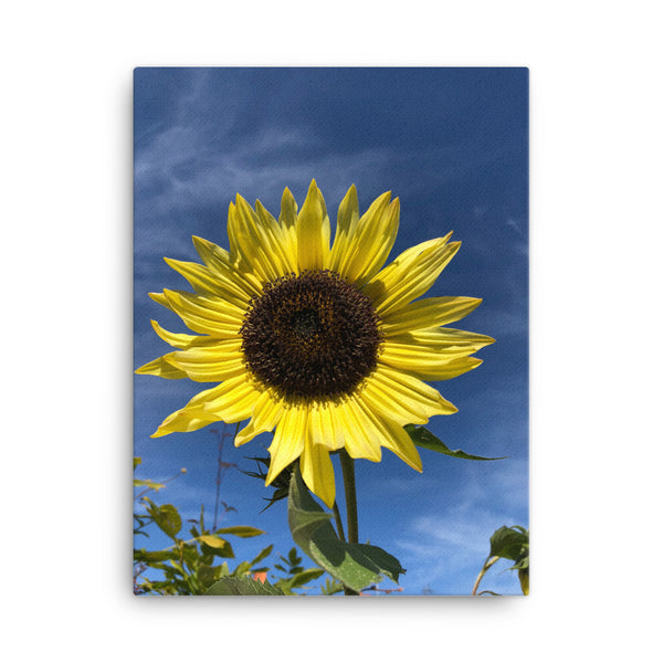"""Bring on the sun, flower"" Yellow Flower Canvas - Nature of Flowers"