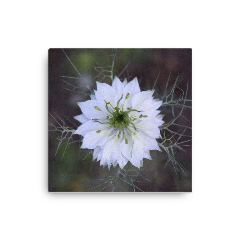 """For Someone Special"" White Flower Canvas - Nature of Flowers"
