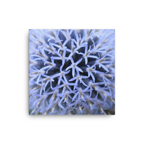 """The Blue Maze Circle"" Blue Flower Canvas - Nature of Flowers"