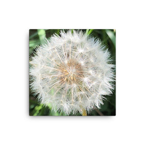 """Blowing in the wind dandelion"" Dandelion Canvas - Nature of Flowers"