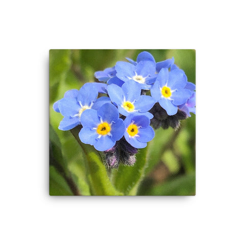 """The floating forget me nots"" Blue Flower Canvas - Nature of Flowers"