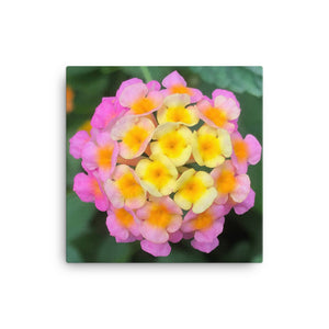"Open image in slideshow, ""The Rainbow Effect in Bloom"" Yellow Orange Pink Flower Canvas - Nature of Flowers"