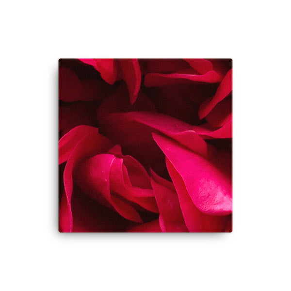 """Back inside to feel the warmth"" Red Flower Canvas - Nature of Flowers"