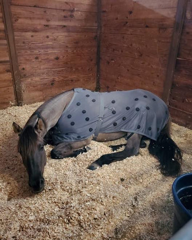 HORSE RESTING IN STALL WITH XLR8 VELOCITY SHEET