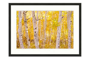 Golden Trees Limited Edition Print