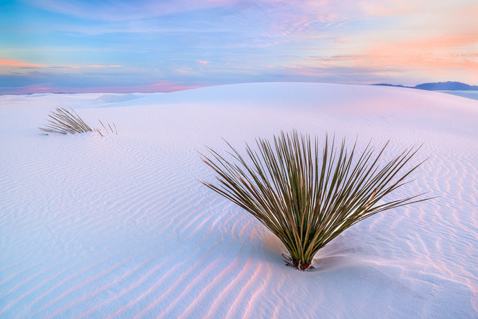 White Dunes Limited Edition Print