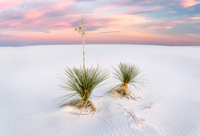 Yucca Limited Edition Print