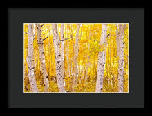 Load image into Gallery viewer, Golden Trees - Francesco Emanuele Carucci Photography