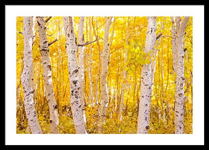 Golden Trees - Francesco Emanuele Carucci Photography