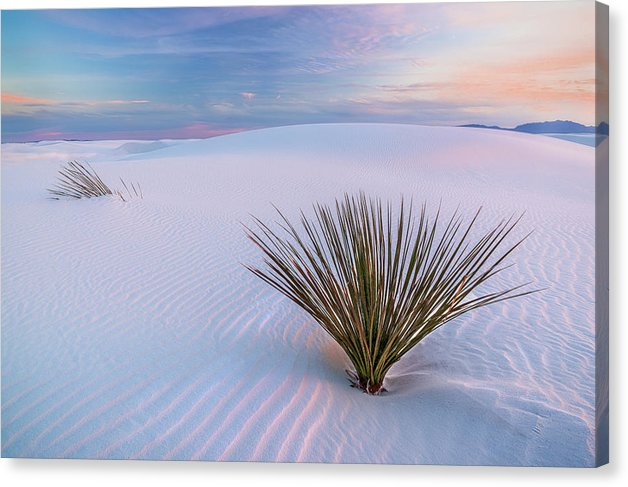 White Dunes - Canvas Print