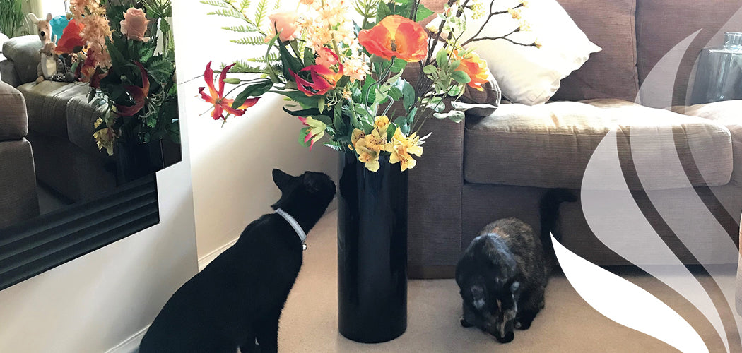 Cats looking at artificial flowers