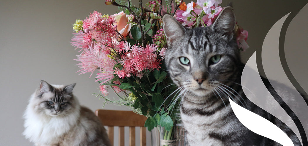 Cats sat next to artificial flowers